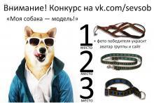 Конкурс «Моя собака — модель!»